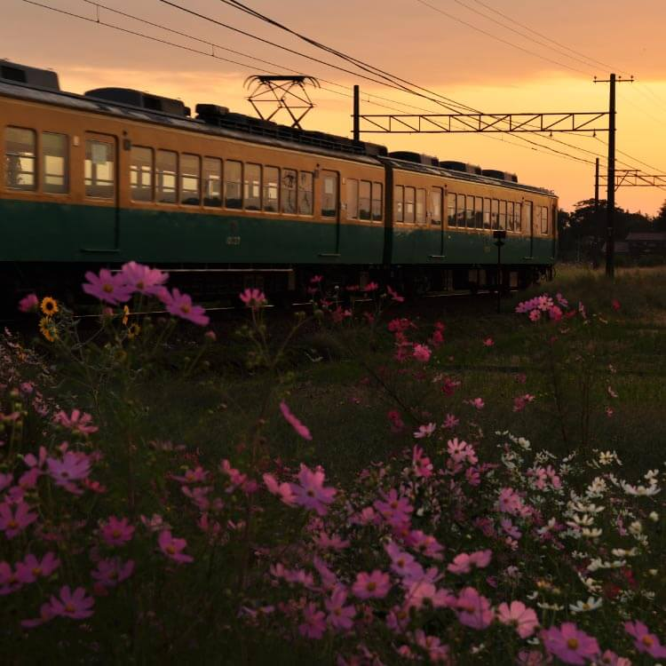 Toyama's Site link