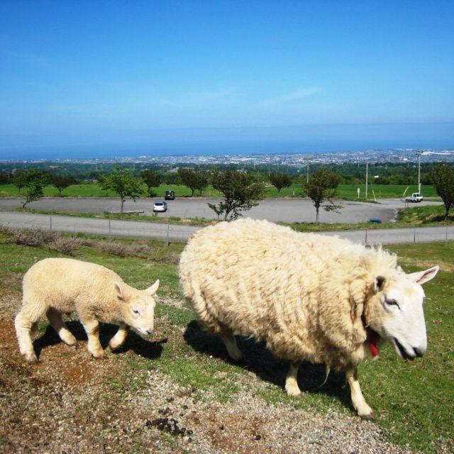 くろべ牧場 動物 (5)